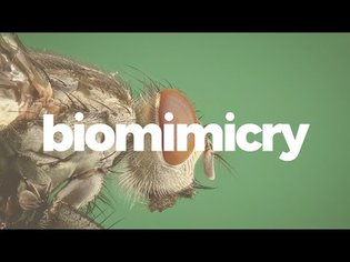 Biomimicry is more than just good design.