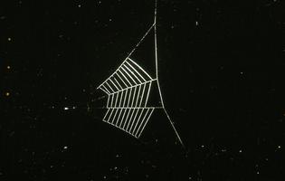 Dr. Peter N Witt – Web Hyptiotes cavatis