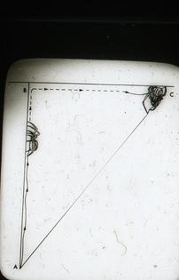 Dr. Peter N Witt – Araneus diadematus, bridge thread