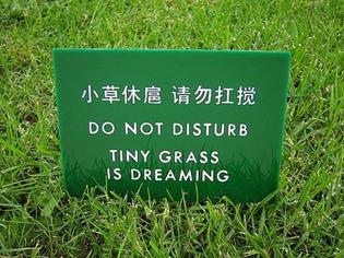 tiny-grass.jpg