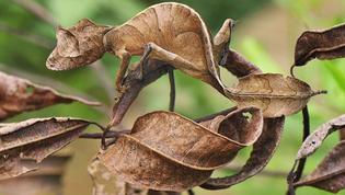 animal-camouflage-20.jpg