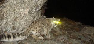 camera-traps-China-Snowleopard-631.jpg