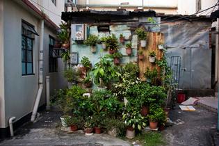 houseplant1.jpg