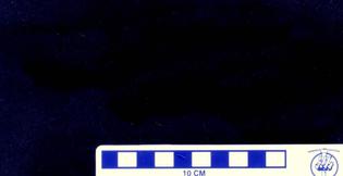 USNM-PAL-537818_2-.jpg