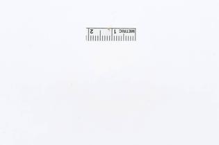 USNMENT00781219-Abaeis-chamberlaini-M-D-.jpg
