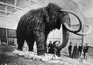 stuffedmammoth.jpg