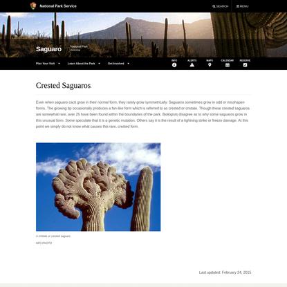 Crested Saguaros - Saguaro National Park (U.S. National Park Service)