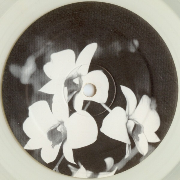 Ovatow-Phalaenopsis.jpg