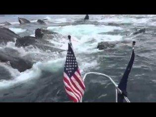 whale video shot by Brad Rich on Tony Flanders boat near Seward Alaska