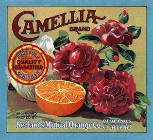 Camellia_2.jpg