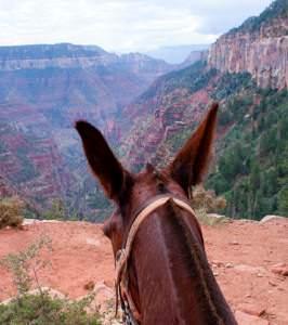 grand-canyon-trail-rides-266x300.jpg