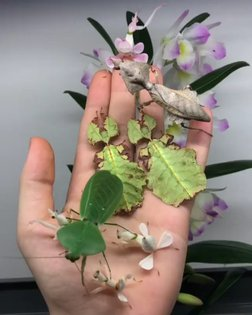 Well is there such thing as beautiful bugs @insecthaus_adi Has them folowing us for more #fun #videos @jayprehistoricpets