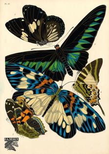 PO-seguy-papillons-plate-10-ncsu-edu.jpg