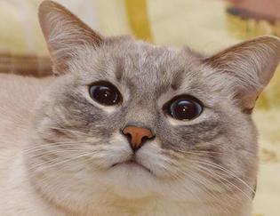 #catjazz #blini #cat #cats #catsofinstagram #instacat #catstagram #catoftheday #catsagram #catlover #lovecats #ilovemycat #pet #pets #petsofinstagram #animal #animals #cute #кот #кошка #mycat #kitty #kot #cute #cat_features #catplanet #kucing #bestmeow
