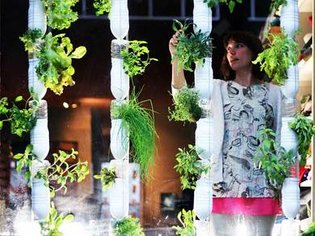 Britta Riley: A garden in my apartment   Video on TED.com