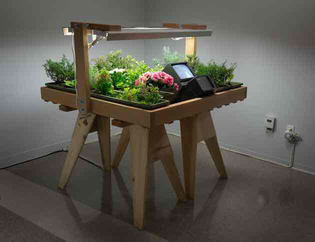 Juan Downey, Life Cycle: Electric light + water + soil - flowers - bees - honey