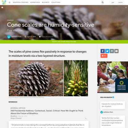 Cone scales are humidity-sensitive : Pine Warbler - AskNature