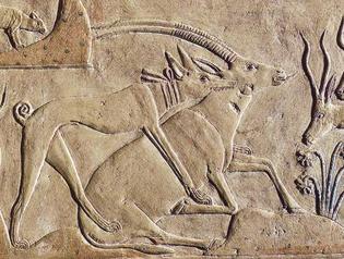 09753les-animeux-en-Egypte-antique-dans-un-mastaba-Saqqarah.jpg