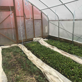 greenhouse beds