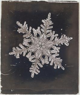 Wilson Alwyn Bentley - Snow Crystal