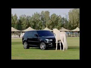 Beautiful Horse vs Range Rover,,|| HD