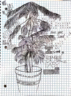Field Sketch #2: Sci Li