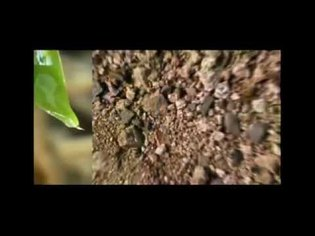 Permaculture Greening the Desert - Geoff Lawton