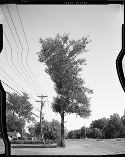 Straightened Trees by Daniel Tempkin