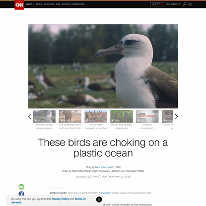 These birds are choking on a plastic ocean