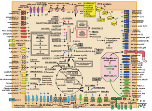 Overview of metabolism and transport in V. cholerae