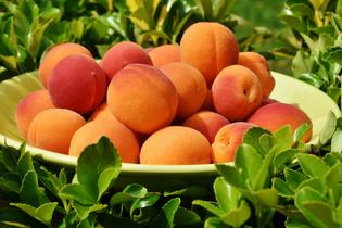 apricots-1522680.jpg