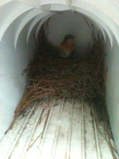 bird_nest_in_my_mailbox_by_zetfer-d53mixb.jpg
