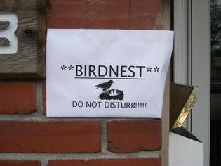 wrens-nesting-in-mailbox-21712446.jpg.pagespeed.ce.szjuqaduqy.jpg