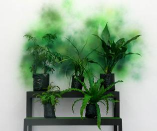 Verde, 2010 by Ishmael Randall Weeks