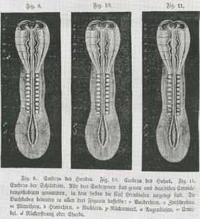 1920px-embryo_-_copies.jpg