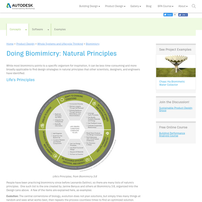 Doing Biomimicry: Natural Principles | Sustainability Workshop