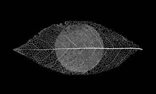 mark-spencer-forensic-botanist-logo-01.jpg