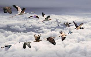 flying-bird-wallpaper.jpg