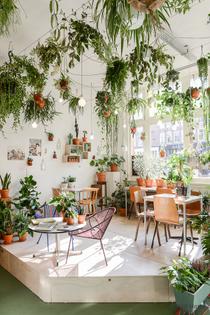 hanging-plants.jpg