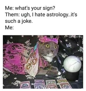 astrology cat