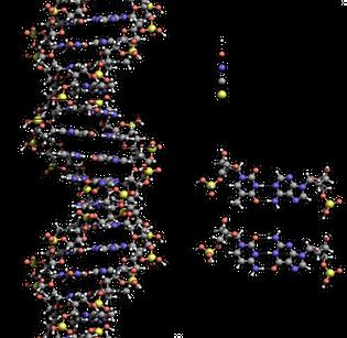 dna_structure-key-labelled.pn_nobb.png
