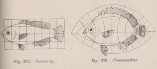 ogf-fig-375-376.jpg