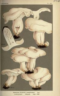 427b6d542cddde00ac38cf5121bdc1e8-fungi-botanical-gardens.jpg