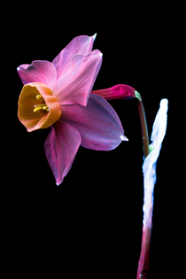 doorofperception.com-craig_burrows-uvivf-plants-photography-27.jpg