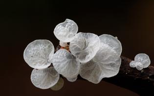 doorofperception.com_steve_axford-fungi-mushrooms-56-840x525.jpg