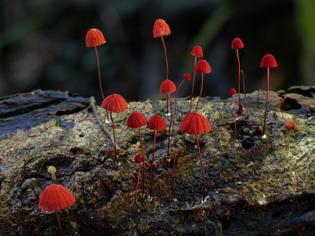doorofperception.com_steve_axford-fungi-mushrooms-32-840x630.jpg