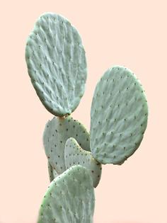 lone-cactus-beige-blush-bakground-600x800.jpg
