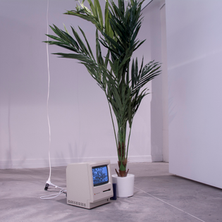 """""""And Other Things You Can Buy On The Internet"""", Installation View, 2016"""