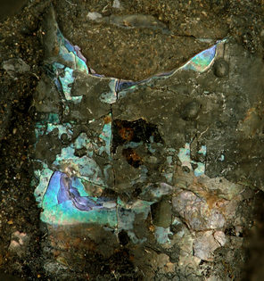 800px-fossil_nautiloid_shell_with_original_iridescent_nacre_in_fossiliferous_asphaltic_limestone.jpg