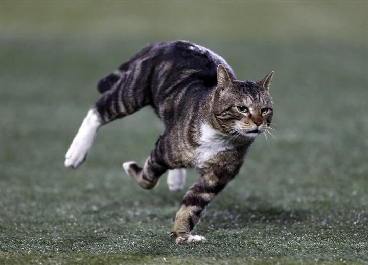 """""""Yesterday a cat ran onto the field at Yokohama Stadium, and the sports photographers' photos of the cat are beautifully dynamic."""" —@mombot"""